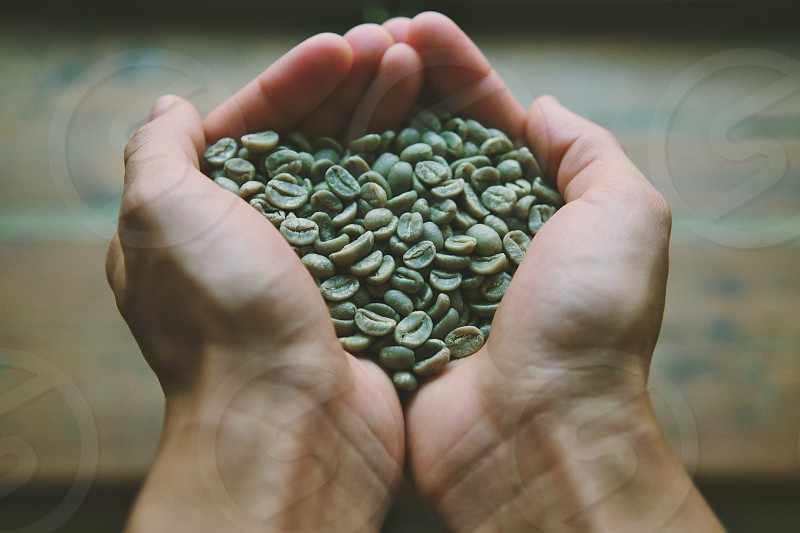 Green coffee beans in hands photo