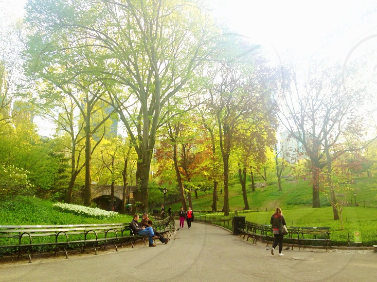 Central Park NYC. photo