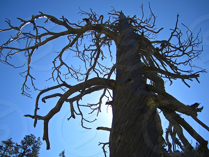 Bare tree photo