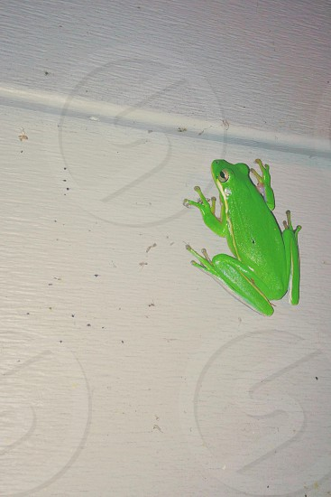 green frog on wall photo