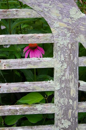 A flower between photo