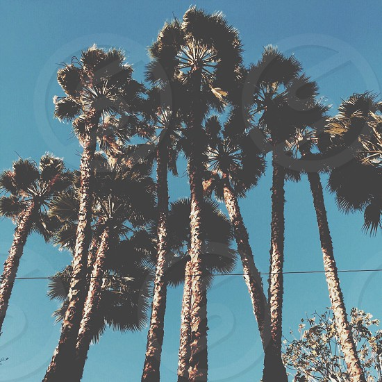 lower angle view of palm trees under blue sky photo