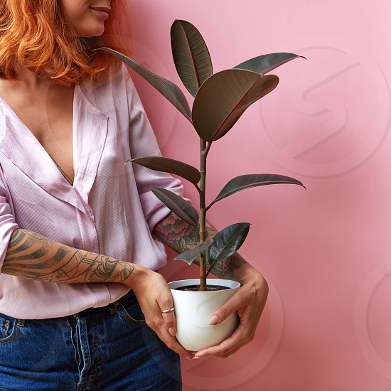 Happy smiling red haired woman with hands of tattoo holds flowerpot with green plant ficus on a pink background place for text. Congratulation gift for Mother's or Woman's Day. photo