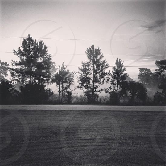 Morning fog. photo