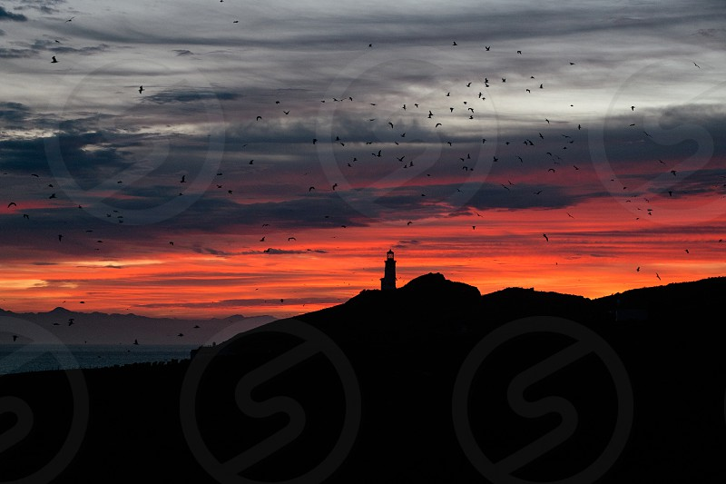 flying birds over the sunset view photo