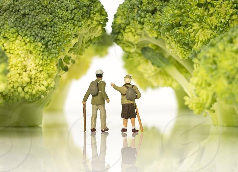 miniature figures older people walking on broccoli trees isolated on white  photo