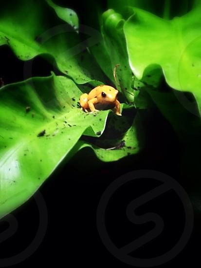 Frog life photo