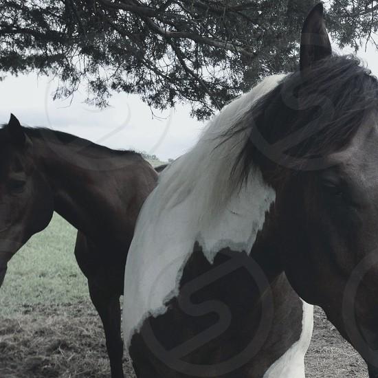 Horses. photo