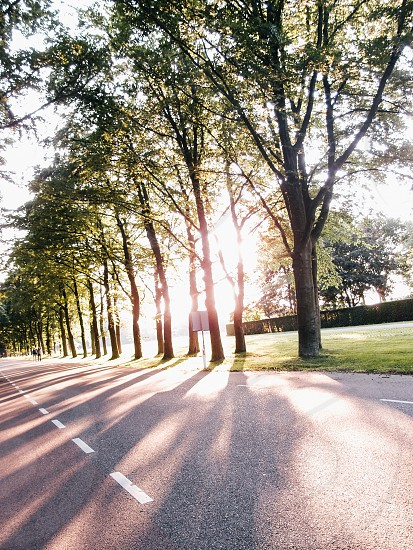 tree lined road in sunset with sun streaming through trees photo