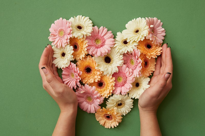 Hands of a girl holding a heart of fresh gerbera flowers on a green background. St. Valentine's Day flat lay copy space photo