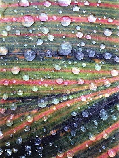 rain drops on colorful leaf photo