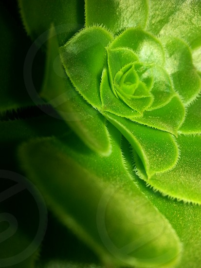 plant green photography macrophotography beautifulview photo