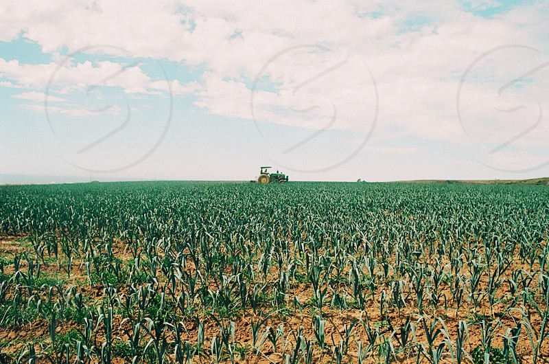 view of green corn plant and green tractor photo