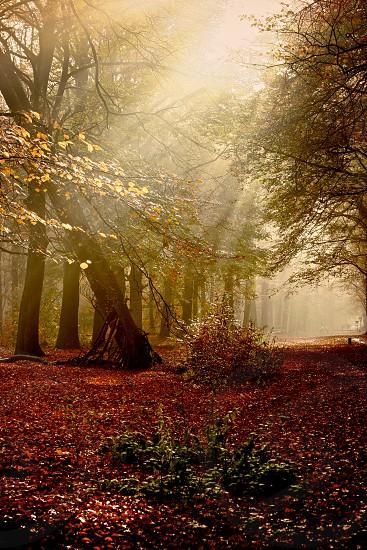 sun in autumn photo