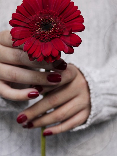Red flower holding flower red nails without face minimalistic minimalism minimalist  photo