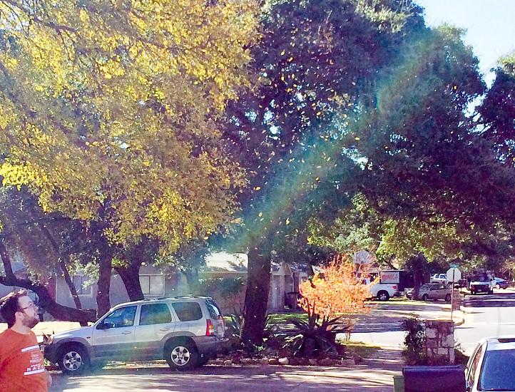 Fall begins! photo