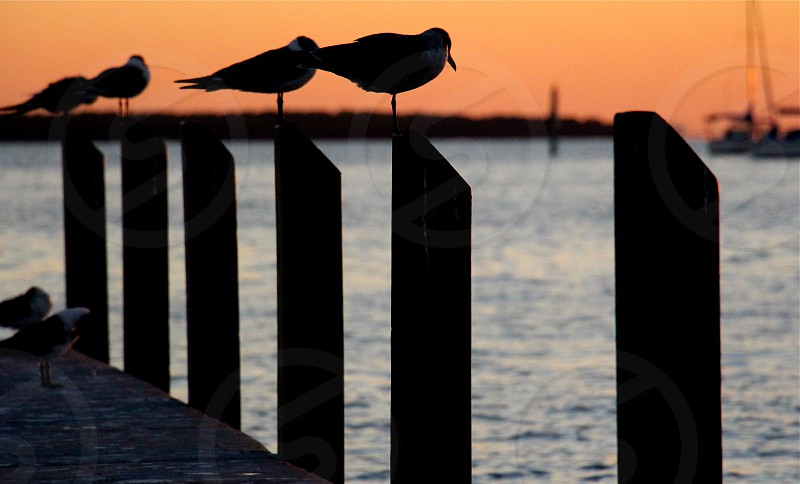 birds perched on wooden posts by the sea photo