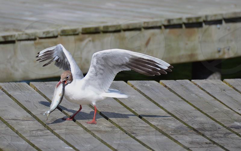 Bird's catch photo