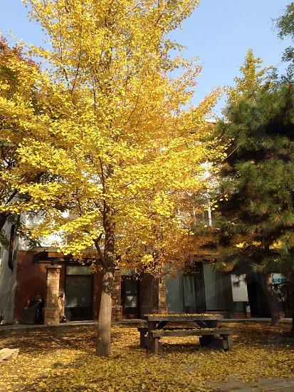 北京郊区秋景 photo