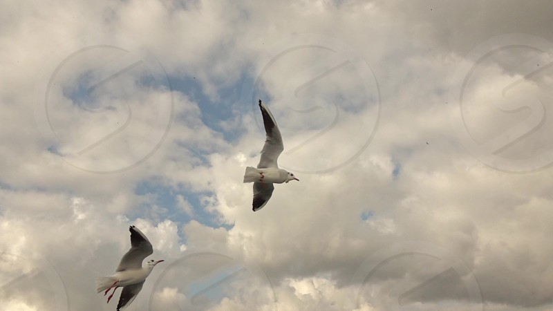 Panoramic view on a flying seagulls and sityckype bank of Bosphorus strait in Istanbul Turkey. Slow motion Full HD video 240fps 1080p. photo