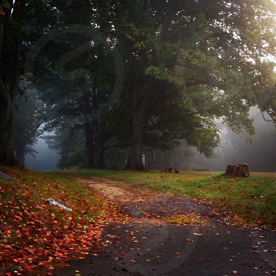 Foggy morning down a fall path. photo