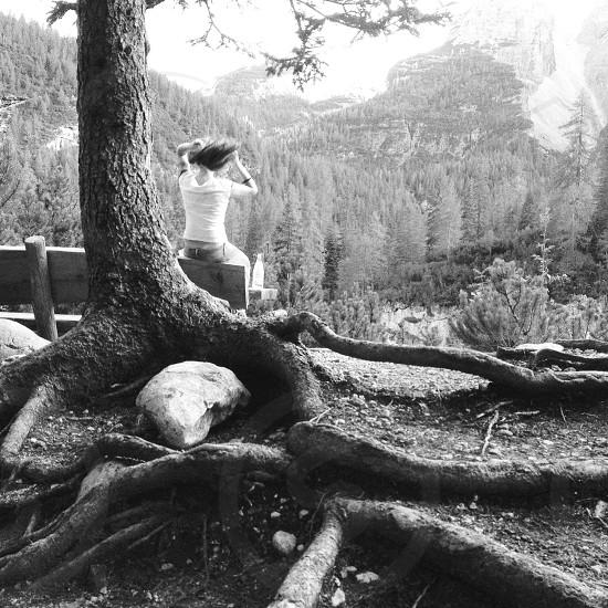large tree photo