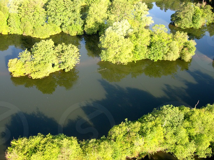 green moss on water photo