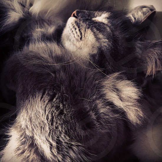 Cat kitty nap sleep sleeping fluffy fur light and shadow sleepy photo