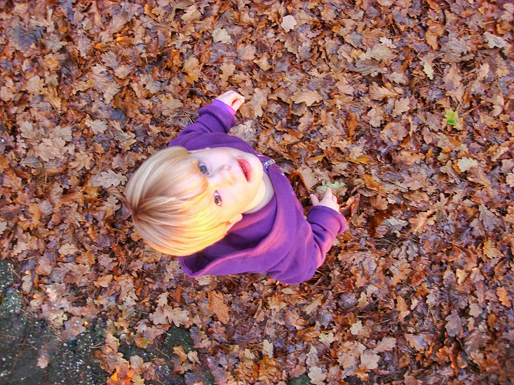 Fall Fashion Leaves Looking Up Girl Fall Colors Purple Clothing Casual Autumn Season Fall Leaves By Hannie Van Baarle Photo Stock Snapwire