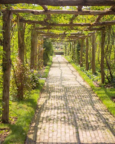 Green garden pathway  photo