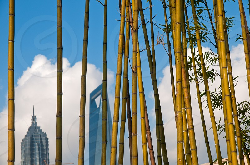 shanghai pudong view from puxi new bund on a sunny day with white clouds and blue sky behind bamboo trees photo