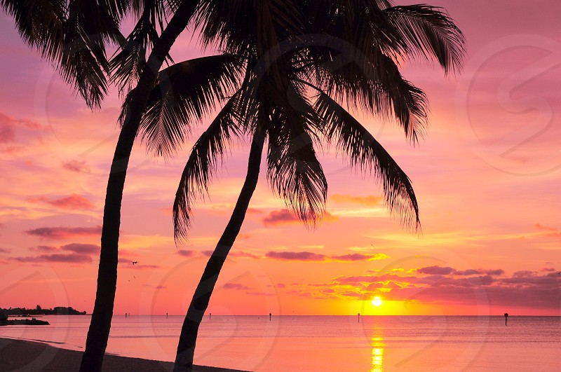 2 palm trees at the beach during yellow sunset photo