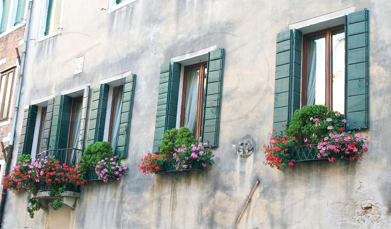 plants on wall photo
