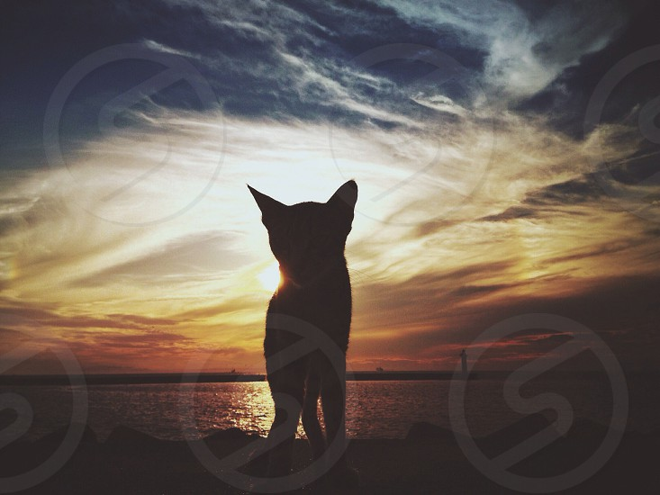 black cat beside sea photo