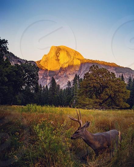 Yosemite - Nature in a picture photo
