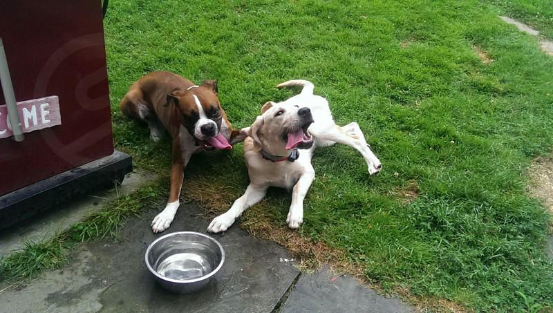Summertime puppies  photo