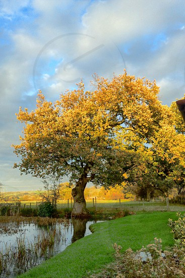 Autumn foliage afternoon sunlight tree over pond reflections  photo