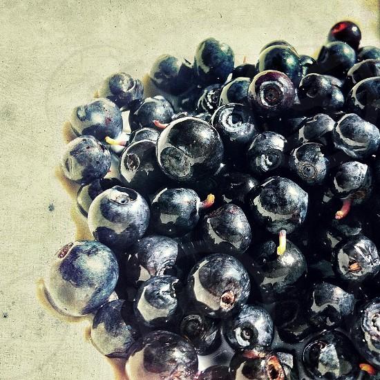 black berries photo