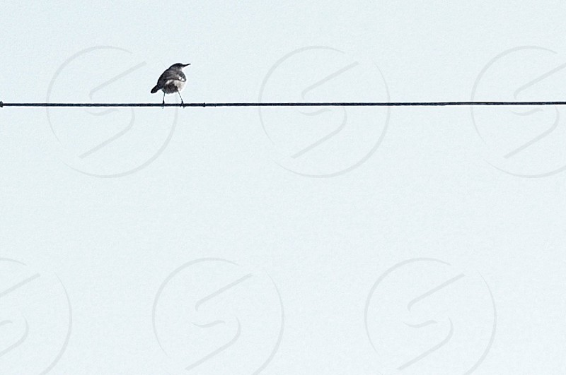 bird on a wire... photo