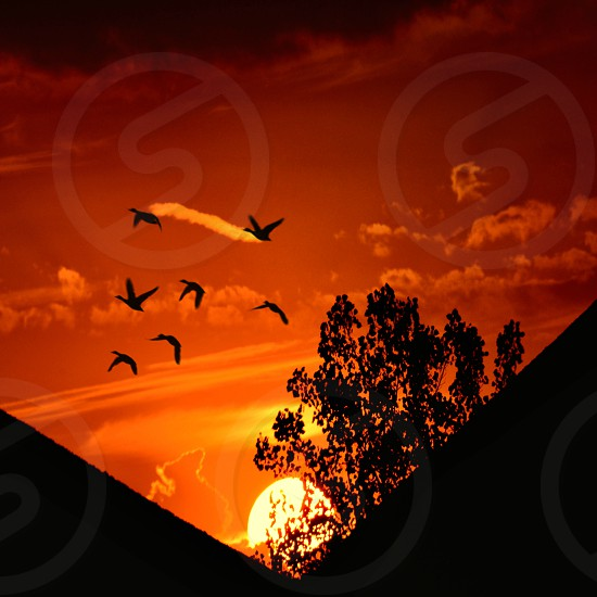 Fly the Fiery Skies photo
