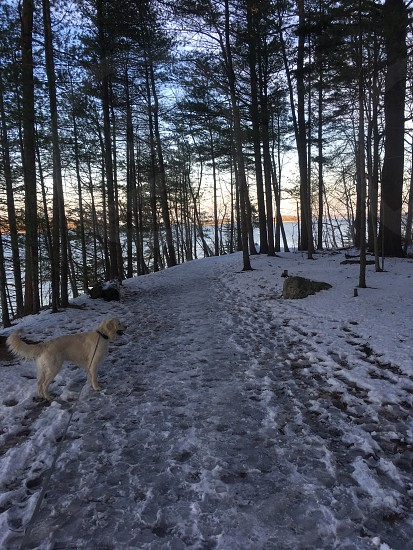 Travel adventure Maine winter dogs  photo