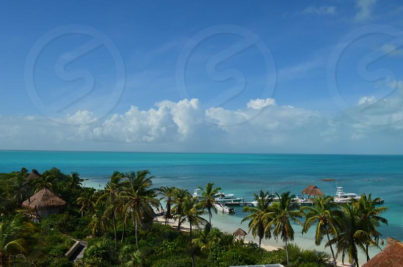 coconut tress beside beach photo