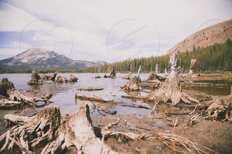 gray and brown tree stumps near body of water and green trees under white and gray clouds photo