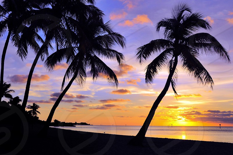 silhouette of palm trees under purple sunset photo