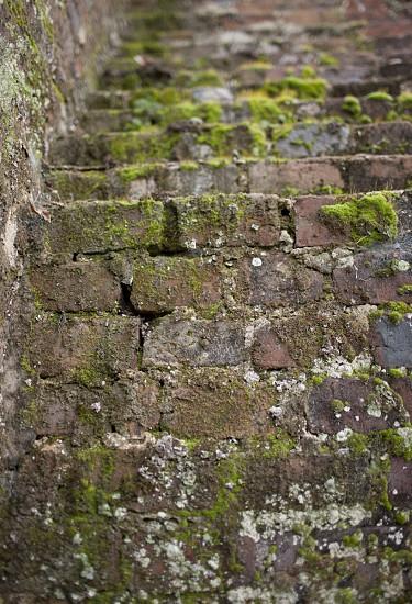 Moss Brick photo