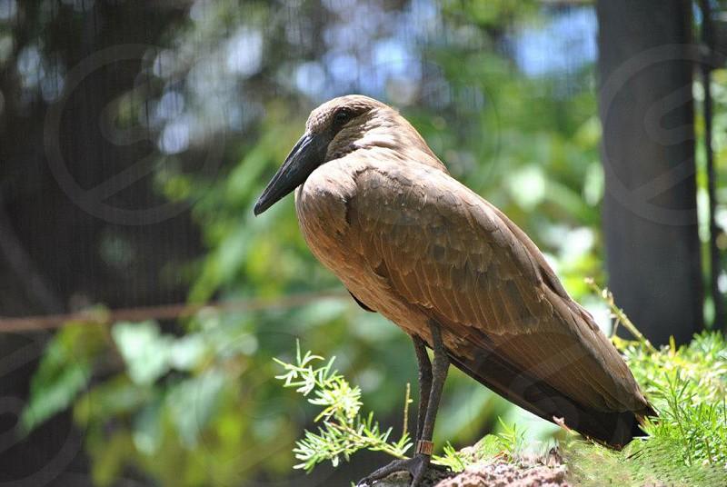 Majestic Bird photo