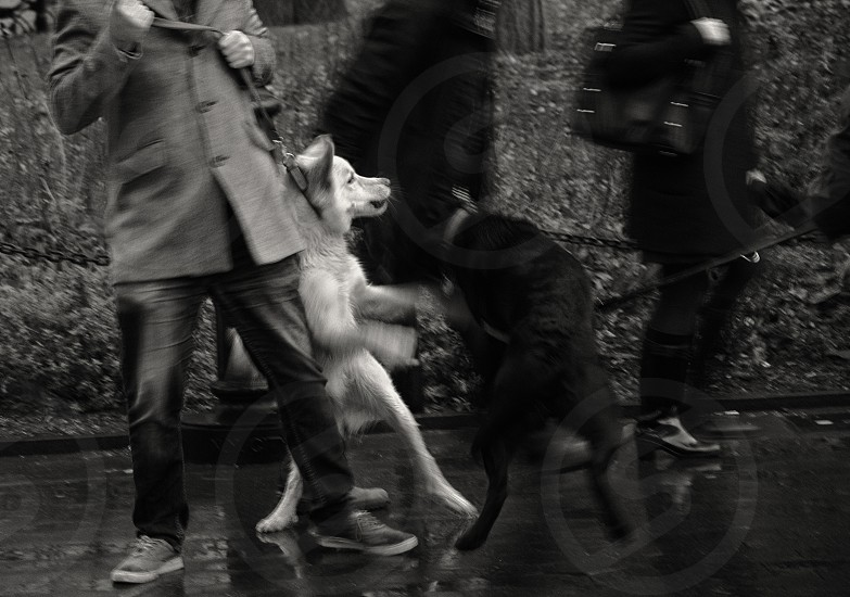 Dog fight in Washington Square Park. photo
