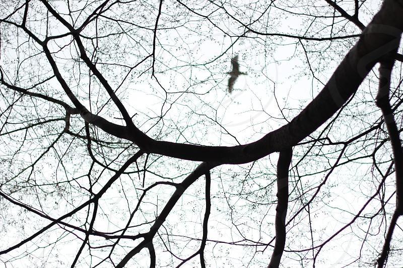 a bird through the trees  photo