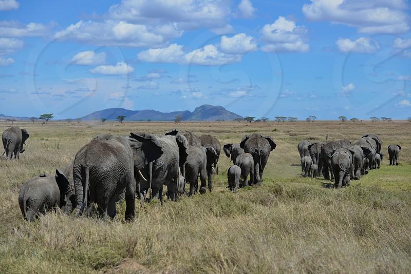 Serengeti National Park - Africa photo