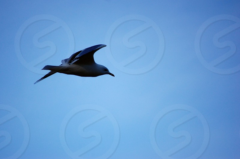 black and white bird in the sky photo